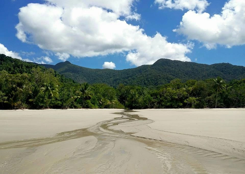Daintree Forest Cairns Australie