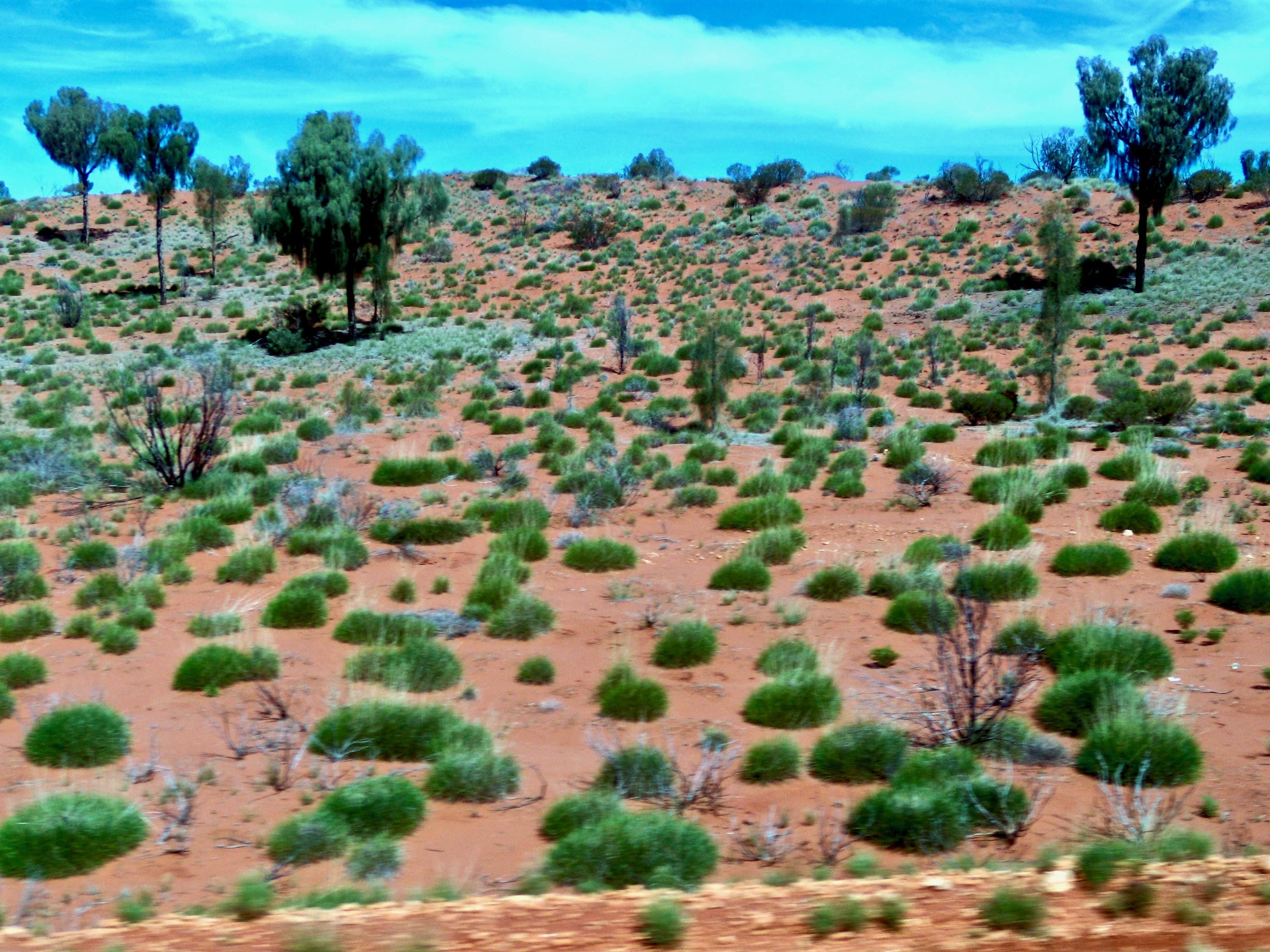 Desert Outback Australie